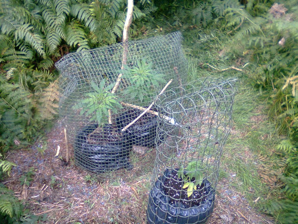 მცენარეების დამცავი ბადე
